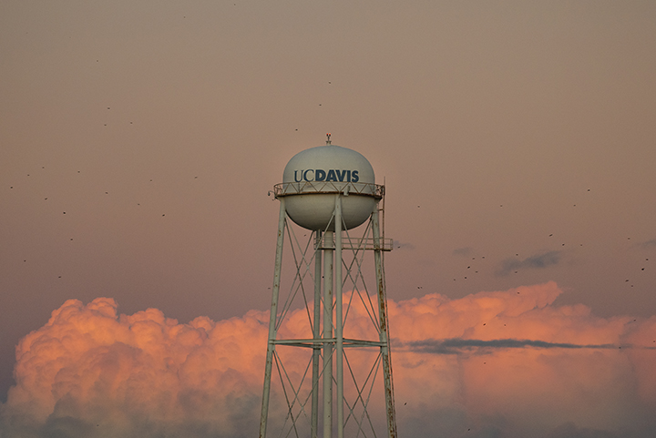 Sunset view of the UC Davis water tower
